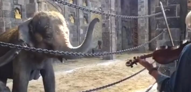 elephant-family-violin-duet-1434382697-article-0